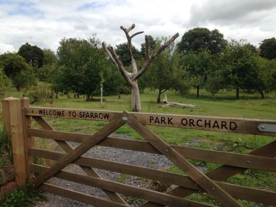 Retired apple tree
